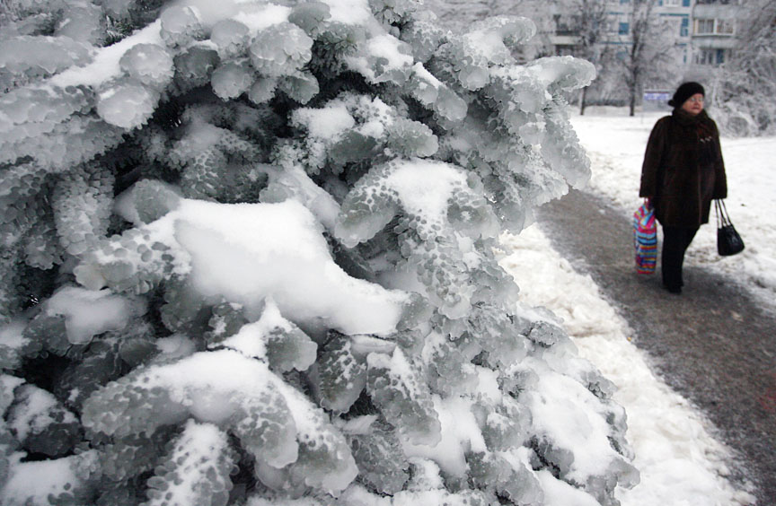 ITAR-TASS: MOSCOW, RUSSIA. DECEMBER 27, 2010. Blue spruce covered in thick ice and snow. Freezing rain, which turns to ice on contact to the ground in mild sub-zero conditions, hit the Russian capital on Saturday coating streets and trees in a thick layer of ice. (Photo ITAR-TASS/ Alexandra Mudrats) Россия. Москва. 27 декабря. Ель, покрытая льдом, на одной из улиц города. Фото ИТАР-ТАСС/ Александра Мудрац