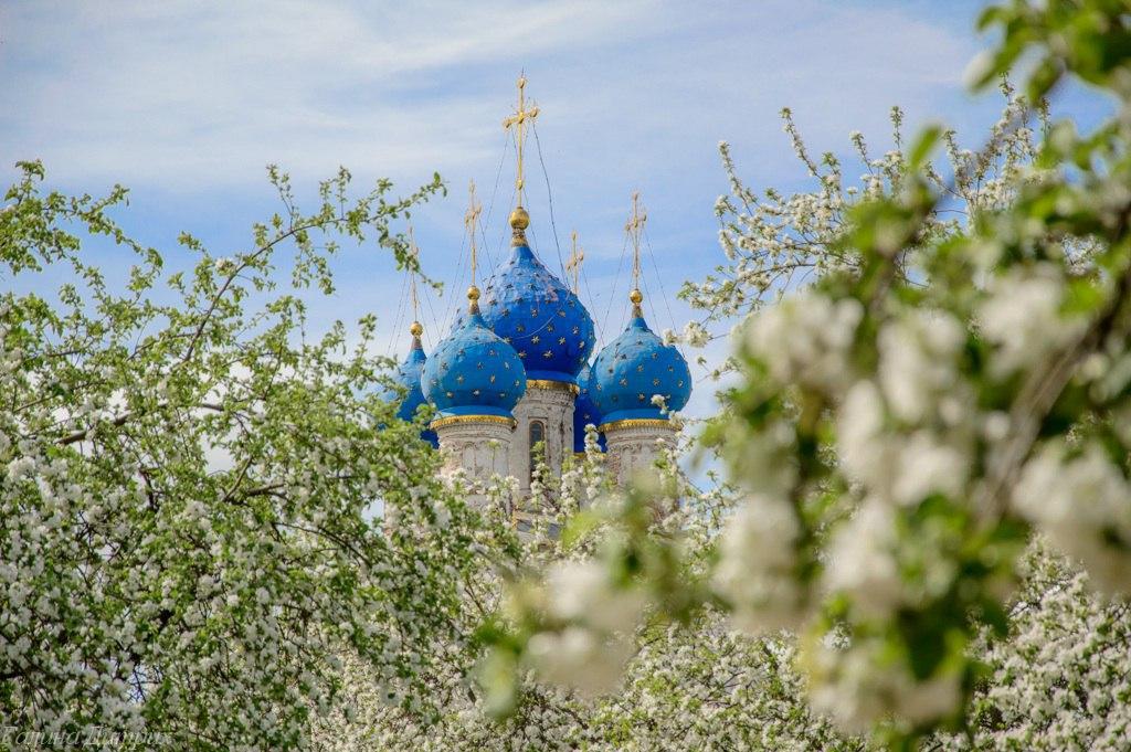 Galina Dietrih: Цветущие яблоневые сады в Коломенском