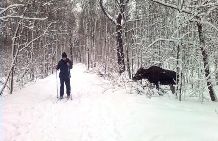Места зимнего отдыха в Гольяново.
