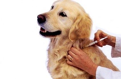 Бесплатная вакцинация животных в ВАО 2018