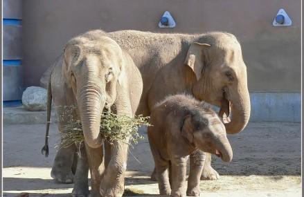 Музей слонов открылся в Московском зоопарке.
