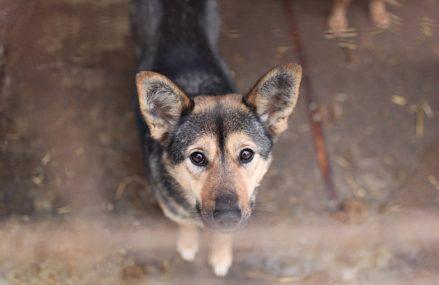 22 мая в Москве пройдет выставка собак и кошек из приюта