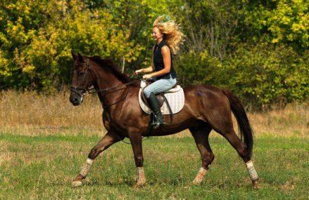 Где в Москве покататься на лошадях: 7 мест