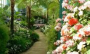 Круглогодичная оранжерея с экзотическими цветами откроется в парке «Сокольники» в 2017 году