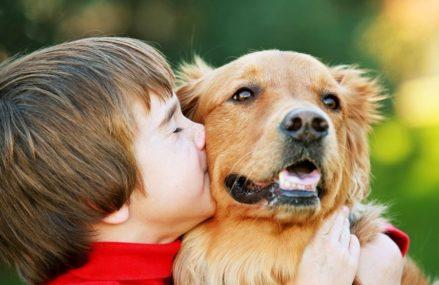 Москвичам могут запретить держать в квартирах крупных собак
