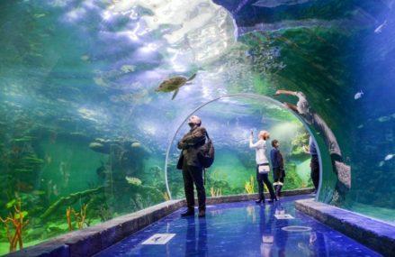 Самые большие океанариумы в Москве: