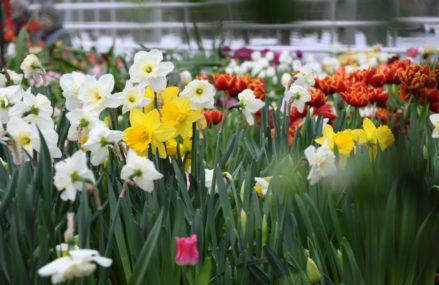 В «Аптекарском огороде» пройдет «Репетиция весны»