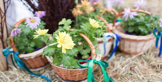 В Перовском парке пройдет цветочный субботник