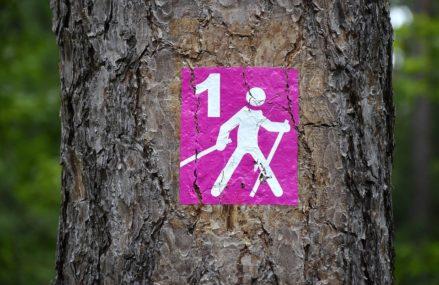 В Измайловском парке открывается весенний сезон для скандинавской ходьбе