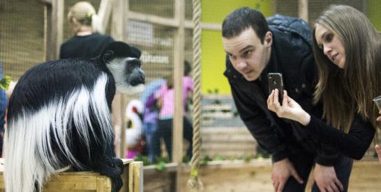 Скрытая угроза. Чем опасны походы в контактные зоопарки