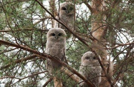 «Мосприрода» проведет бесплатную экскурсию по природной территории Измайловского лесопарка