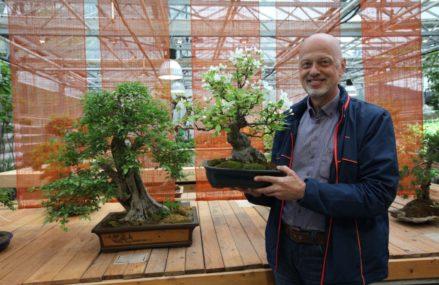 Люди в ВАО: житель Измайлова более 20 лет создаёт бонсай из российских деревьев