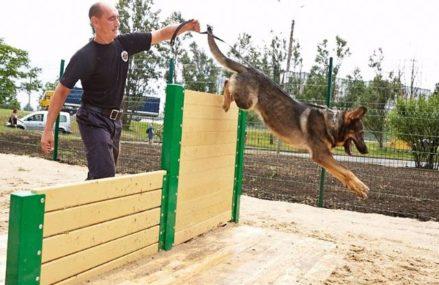 Площадку для выгула собак обустроят на Соколиной горе