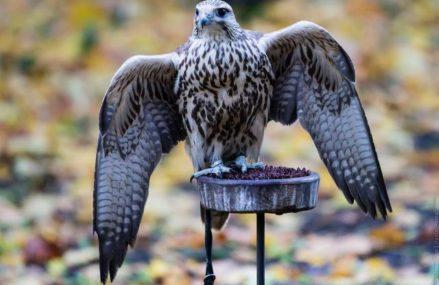 Птицы в «Сокольниках» ждут попечителей