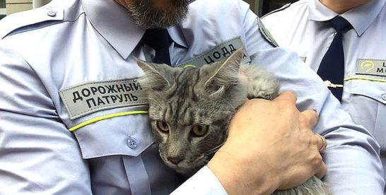 Сотрудники дорожного патруля спасли четырехмесячного кота на Третьем Транспортном кольце