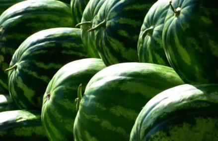 В ВАО с 1 августа официально начали работу бахчевые развалы. Как правильно выбирать арбузы и дыни?