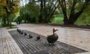 Интересная столица: где найти самые необычные памятники Москвы!