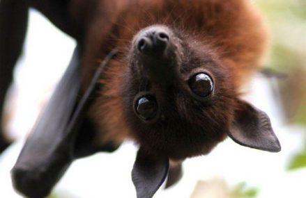 Ночь летучей мыши в Измайлово пройдет 24 августа