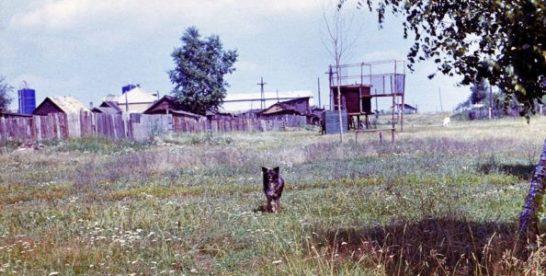 Деревня Косино 1973г.