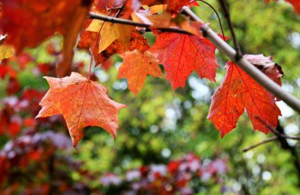 Краски осени в Измайловском Парке