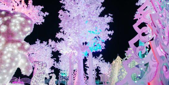 «Волшебный лес» в Саду астрономов парка Сокольники
