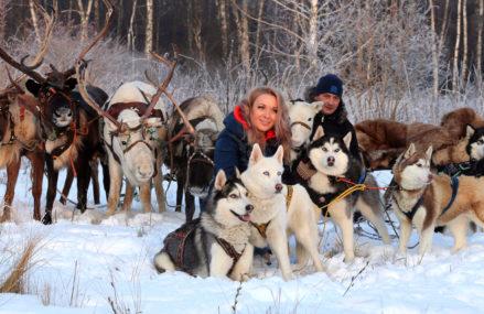 В восьми московских парках организуют катание на упряжках