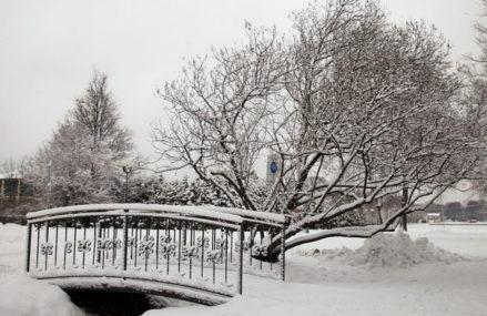 Бесплатная экскурсия «Жил-был лес» состоится в Измайлово