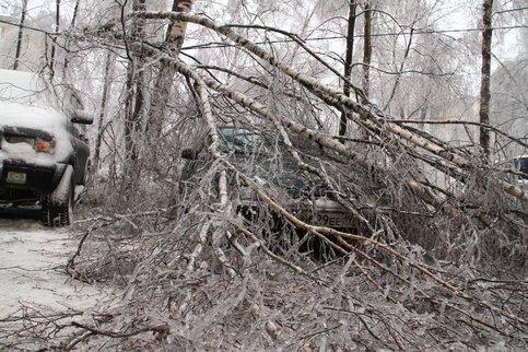 На пересечении 7-ой парковой и Нижней Первомайской упавшее дерево