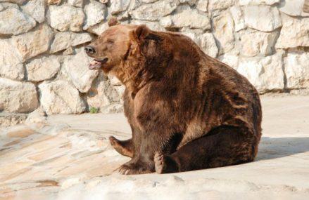 Московский зоопарк переходит на летний режим работы с 1 марта