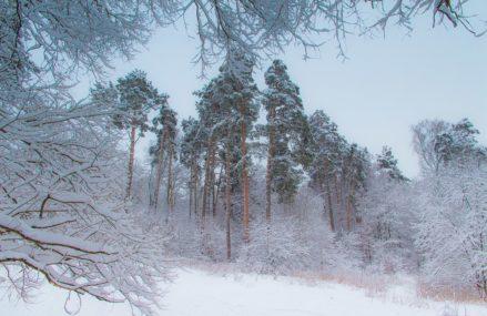 Измайловский лес