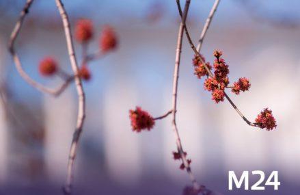 Астрономическая весна наступит завтра вечером
