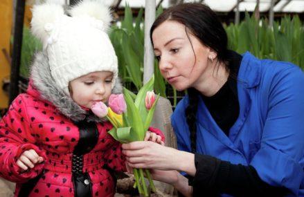 Один тюльпан к 8 марта в Москве можно будет купить от 50 до 120 рублей