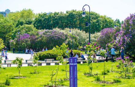 Самые красивые места Москвы, где цветёт сирень, яблони и жасмин