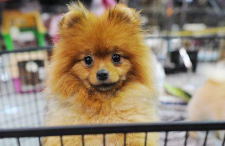 Безответственных хозяев собак будут штрафовать