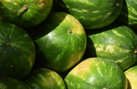 Арбузы, абрикосы и черешня – советы по выбору фруктов