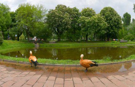 50 бесплатных экскурсий по паркам и усадьбам столицы проведут с 27 июля по 26 августа