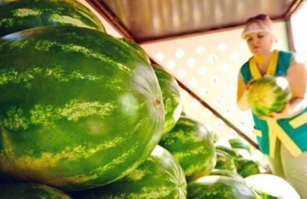 Жители Восточного смогут приобрести сладкие южные плоды на бахчевых развалах