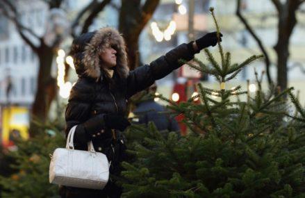 Елочные базары в Новокосино открываются с 20 декабря