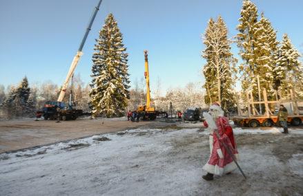 Главная новогодняя елка страны приедет в Кремль из Подмосковья 18 декабря