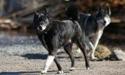 Неизвестные держат в страхе владельцев собак в Южном Бутове