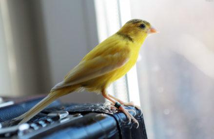 Сезонная депрессия одолела московских птиц