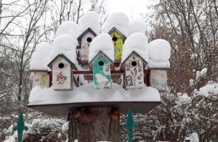 В «Сокольниках» начали раздавать корм для птиц