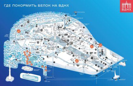 Специальную карту мест кормления белок составили на ВДНХ