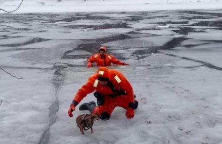 Домашнюю собаку спасли из полыньи на Большом Садовом пруду