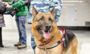 Собаки на страже московского метро