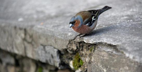Орнитолог рекомендовал для спасения птиц наносить на зеркальные стекла изображения глаз и силуэтов людей