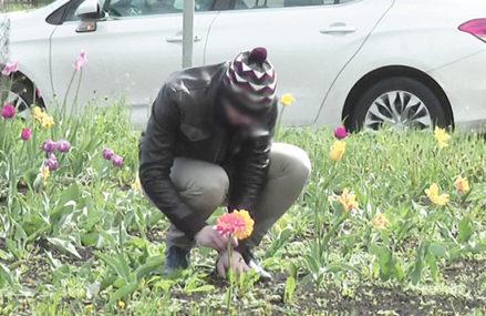 За кражу цветов с клумбы ждет штраф