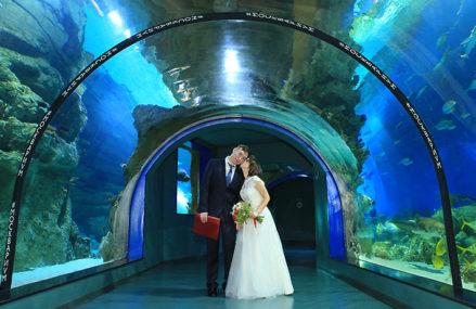 10 необычных мест для бракосочетаний в Москве и Подмосковье