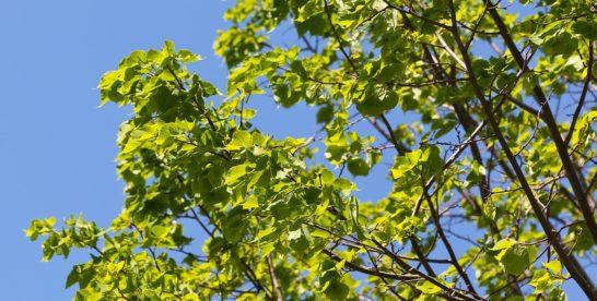 В честь новорожденных горожан: в столичных лесопарках этой осенью высадят более 2300 именных деревьев