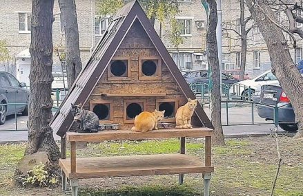 В Москве в районе Динамо появился «Кошкин дом»